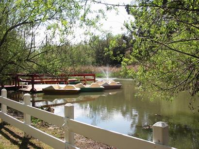Paddle Boats available for corporate picnics