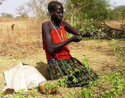 Picking leaves to boil and eat - the worst famine since WWII in South Sudan