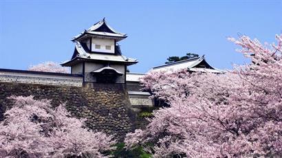 Exotic Japan