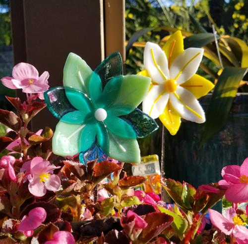 Colorful flowers for inside or for your garden!