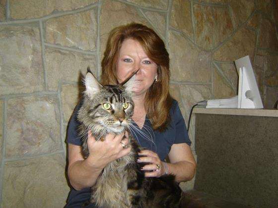 Angie and Simba, a Maine Coon cat