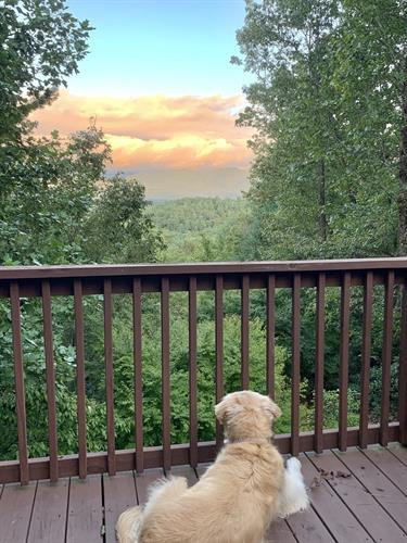 Most of our cabins are pet friendly with no weight limits