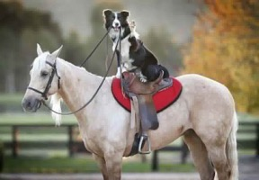 Ride in to South Paw Natural Pets