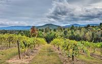 Ott Farms and Vineyard