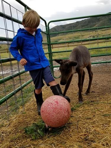Reindeer Training - kickball!