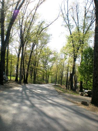 Tree Lined Roads