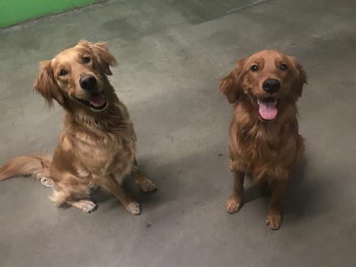Max & Layla !