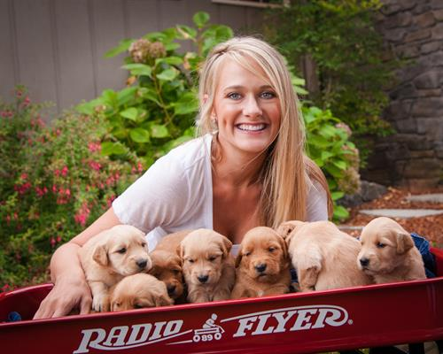 Jenice Lawson with Golden Retriever puppies, Amity