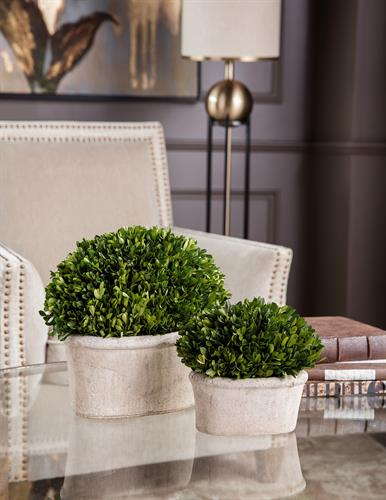 Decorative boxwoods. A classic addition to any homes decor.