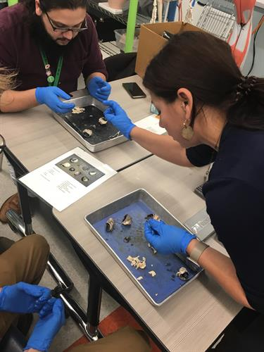 Dissection Office Hours with Exports: One of the Teacher Supports Offered by STEM Library Lab where local experts come and host interactive sessions that teach a new skill or topic to STEM teachers