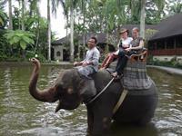 Elephant Reserve- Bali