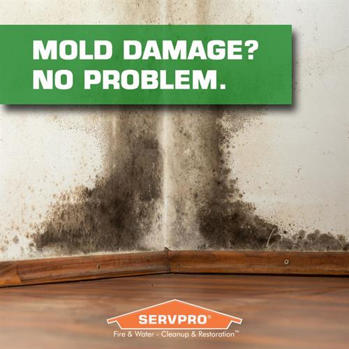 Ask about our mold mitigation services