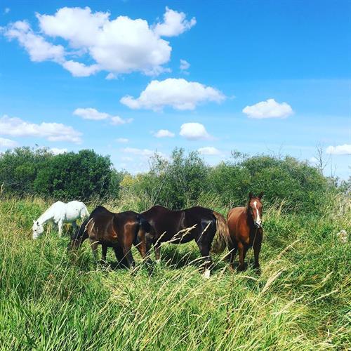 Gallery Image Horses_in_the_field.jpg