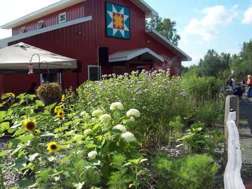 Farmstead Creamery in the summertime, with our butterfly garden and outdoor seating