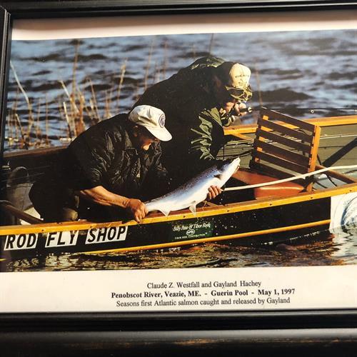 Releasing an Atlantic Salmon