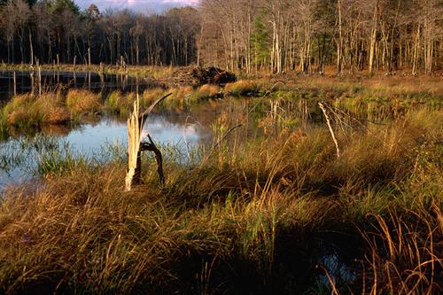 Beaver Pond (Route 9 between Belchertown & Ware)