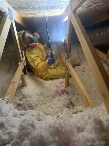 Mold Remediation in Attic