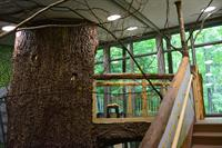 Forest Exhibit