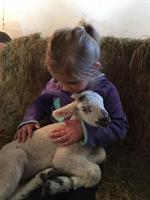 Lambing Time & Farm Babies at Govin's Farm