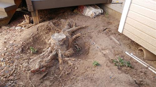 Ugly Stump!