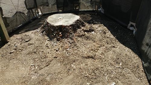 Big Ugly Stump