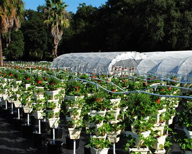 Hydroponic Vegetables at The Farm at Rockledge Gardens
