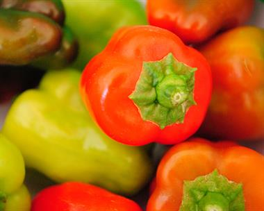 Gallery Image tri-color_peppers.JPG