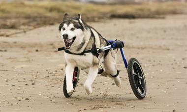 "WalkinWheels for ""Special Pets"""