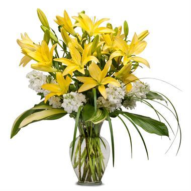 Bold and beatiful Lilies