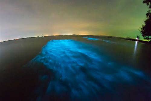 Florida Bioluminescence Kayaking