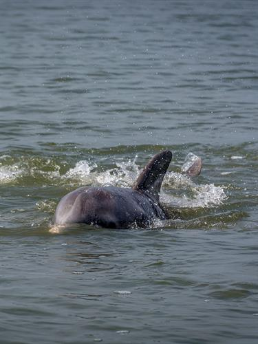 Swimming in the Dolphin and Manatee Lagoon