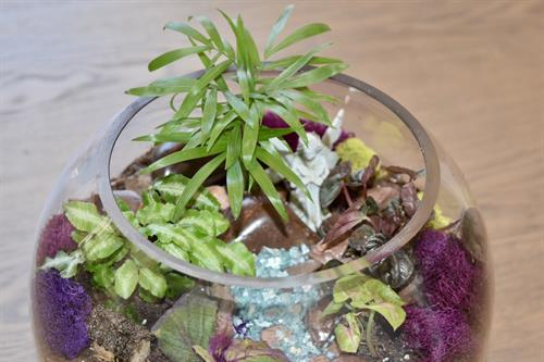 Round Terrarium with Water Theme