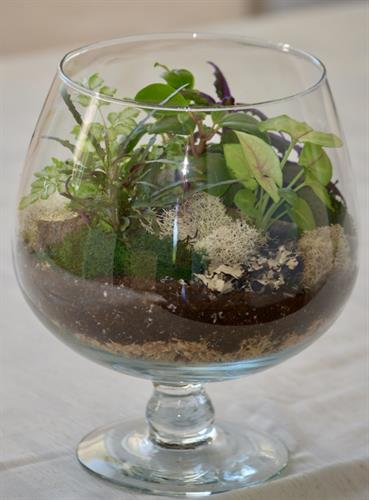 Brandy Glass Terrarium