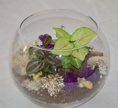 Bubble Ball Terrarium