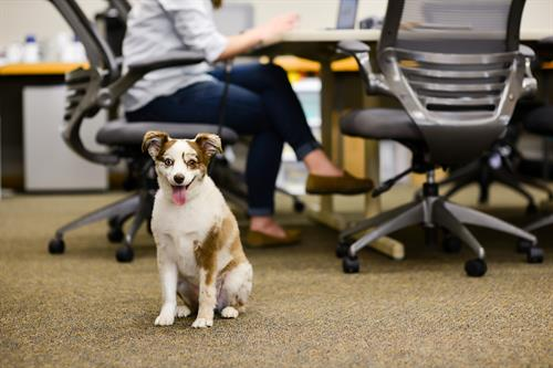 Our office is creative, intuitive, strategic, and dog friendly!