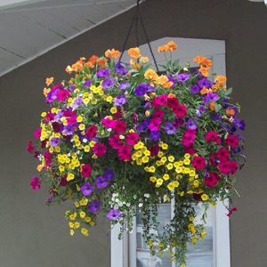 Exquisite Hanging Baskets