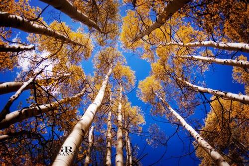 Gallery Image photocredit_third_eye_aspens.jpg
