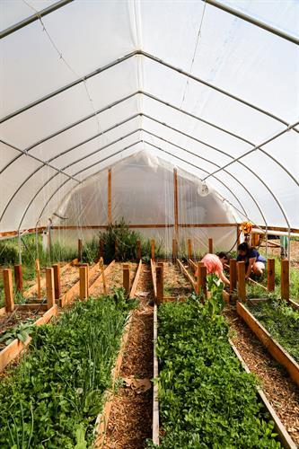 Chipeta Community Garden