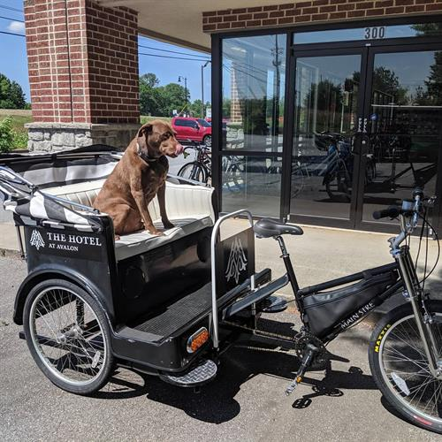 Hershey Taking A Test Ride For The Avalon Hotel On A Project Twisted Spokes Bicycles Did