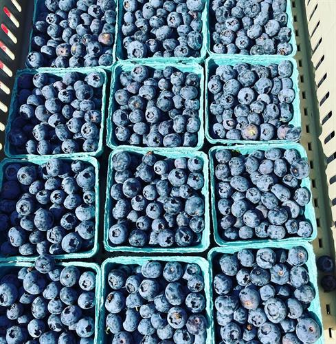 Gallery Image blueberries.jpg