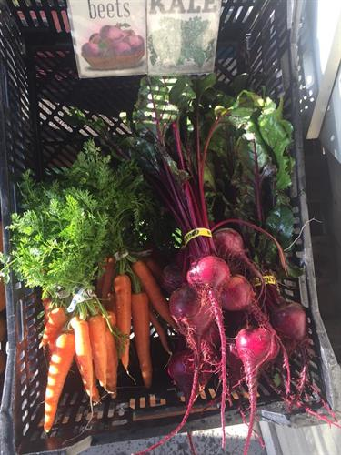 Carrots and Beets!