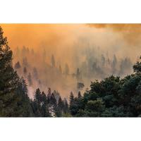 CalChamber: Employer Requirements Under California's Emergency Wildfire Smoke Regulation