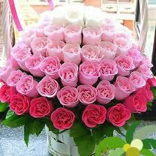 6 shades of Pink