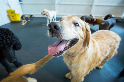 Happy, healthy dog day care faces.