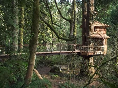 The Burl Treehouse (featured as The Honeymoon Suite on Treehouse Masters) at TreeHouse Point