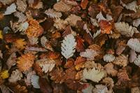 Fall Equinox BBQ - Revel Issaquah