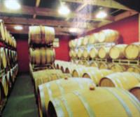 Barrel room in winery