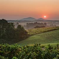 Kaya Sunrise