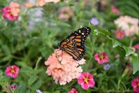 Dahlonega Butterfly Farm Opening Day Postponed