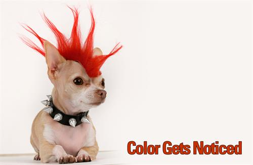 Gallery Image Color_Gets_Noticed_Dog.jpg